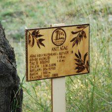 Ölümsüz Ağacın Taze Lezzetleri Görücüye Çıkıyor