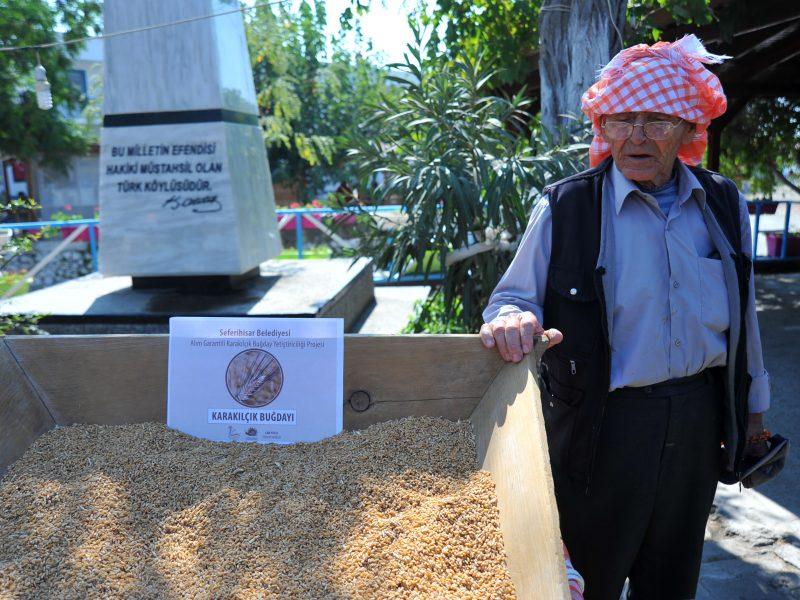 Alım Garantili Buğday Üretim Projesi Başladı