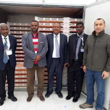 Sudanlıların Kurutulmuş Mandalina İlgisi