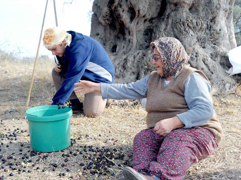 Yarım Litre Zeytinyağı 30 Bin Liraya Satıldı
