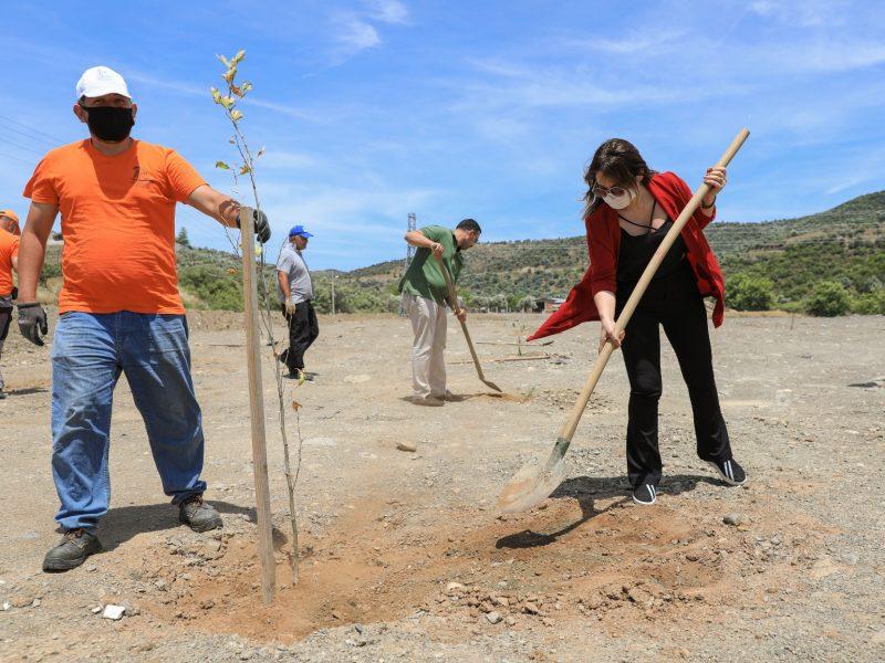Seferihisar Kocaçay mevkiindeGençlik Ormanı'nın ilk fidanları dikildi