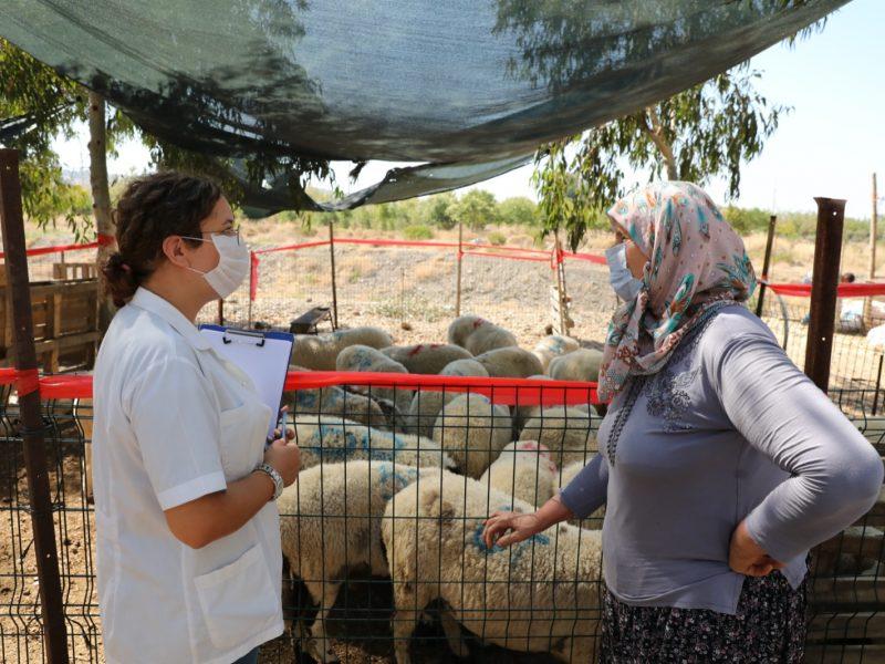 Seferihisar'da Kurbanlık Hayvan Pazarları denetleniyor