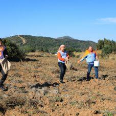 Atalık Karakılçık Buğday ekimi başladı